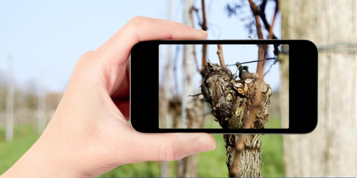 Prévisions de rendement : l'innovation offre de belles perspectives en viticulture !