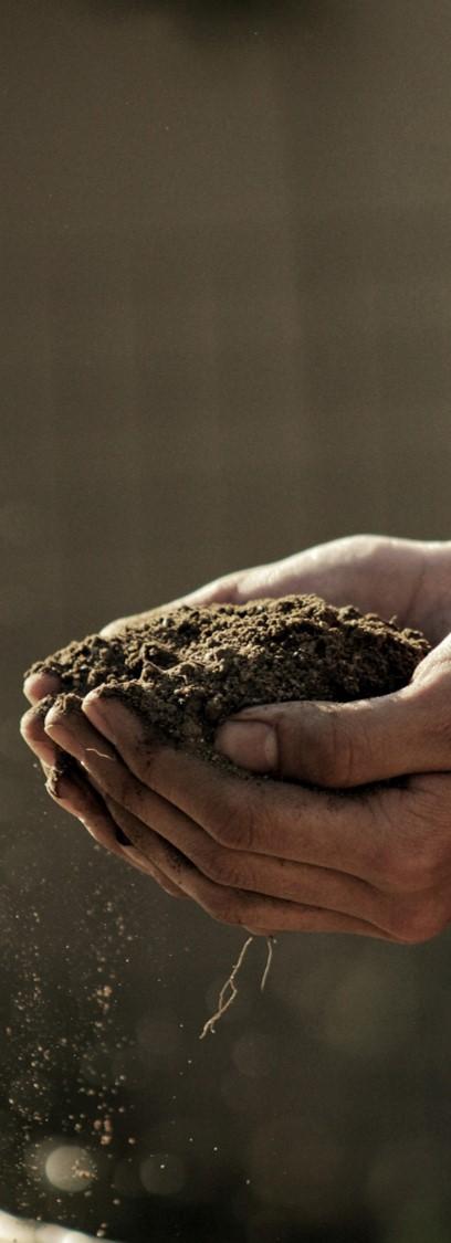terre mains sol