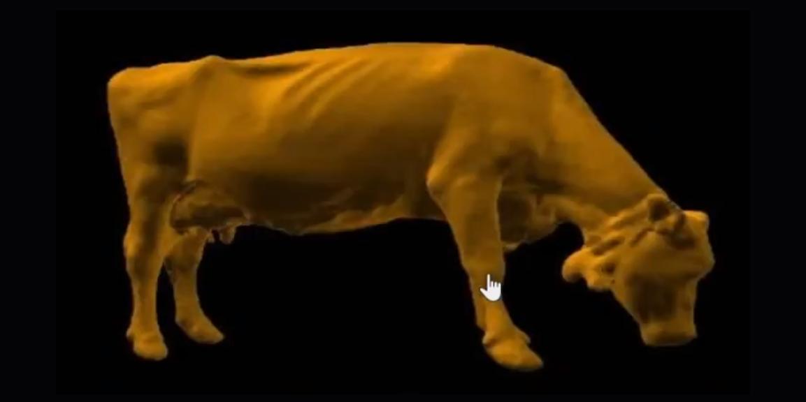 élevage bovins imagerie 3D modélisation