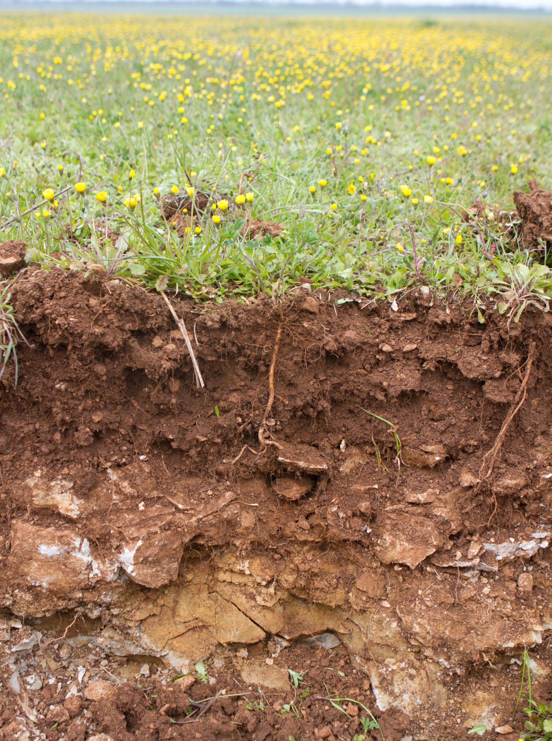 profil sol agriculture régénératrice