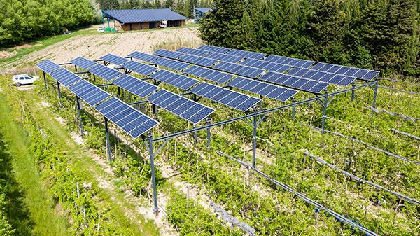 agrivoltaïsme panneaux solaires viticulture