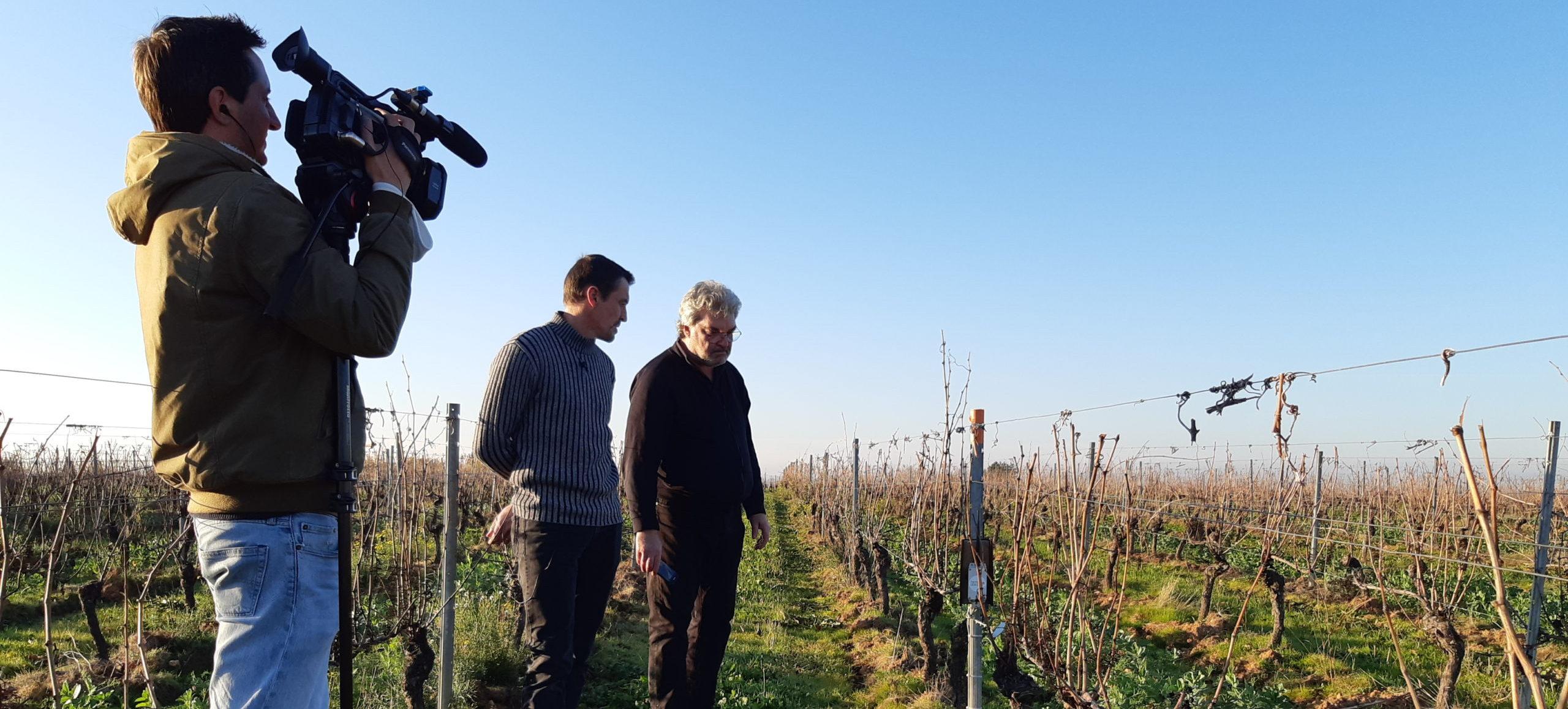 capteurs sinafis interview viticulture vignes