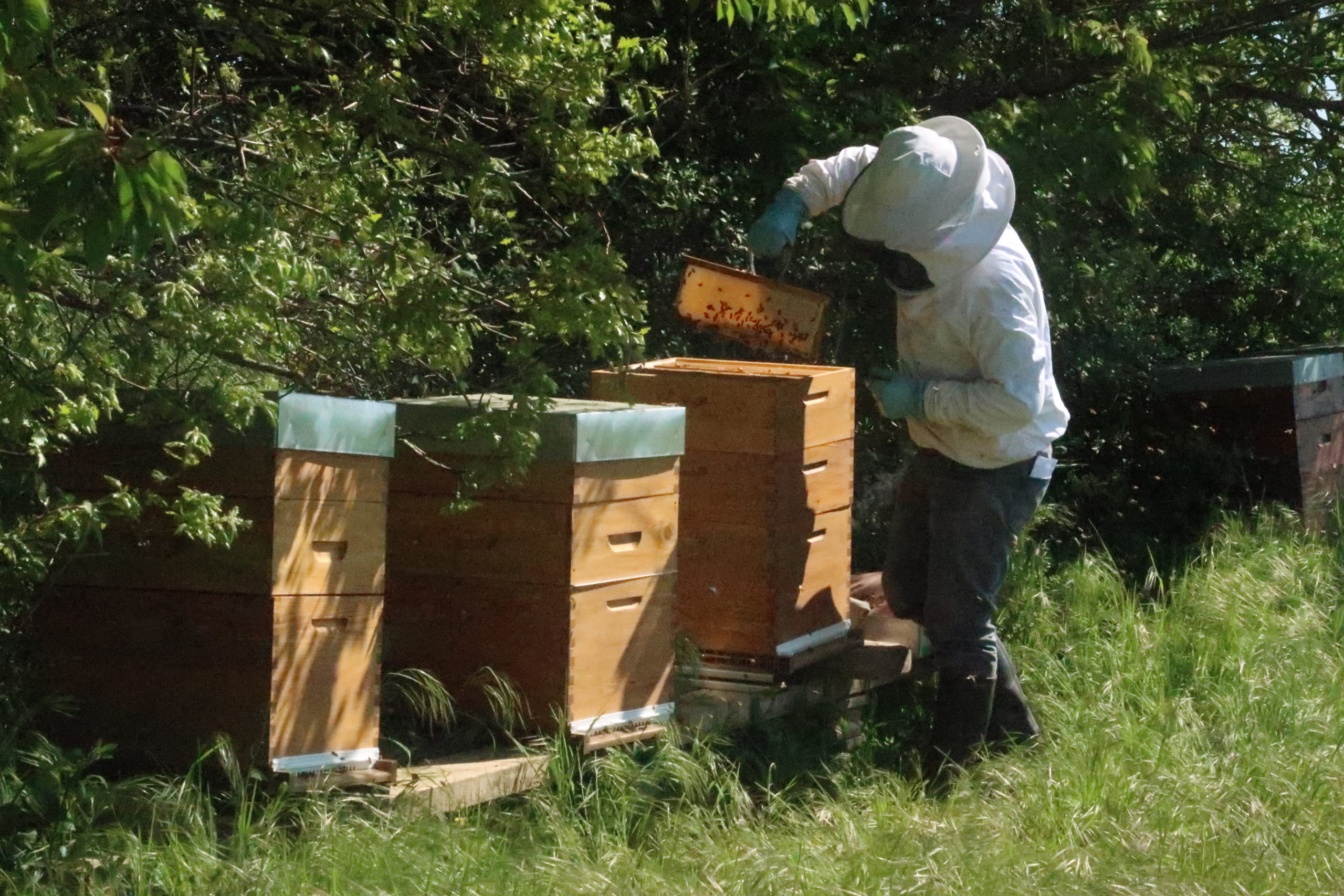 ruche apitech - article gel