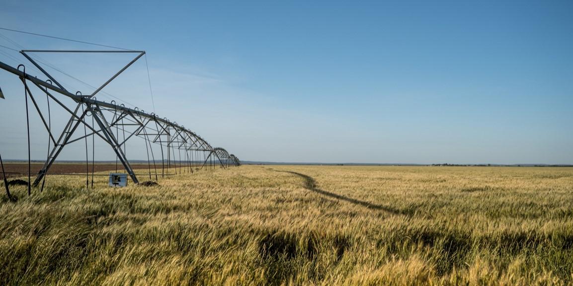 vignette terranis irrigation orge