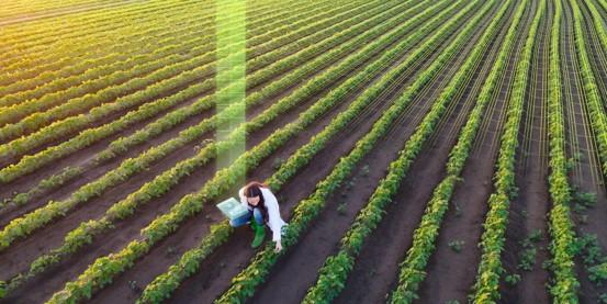 greenback évaluation santé sols agricoles carbone